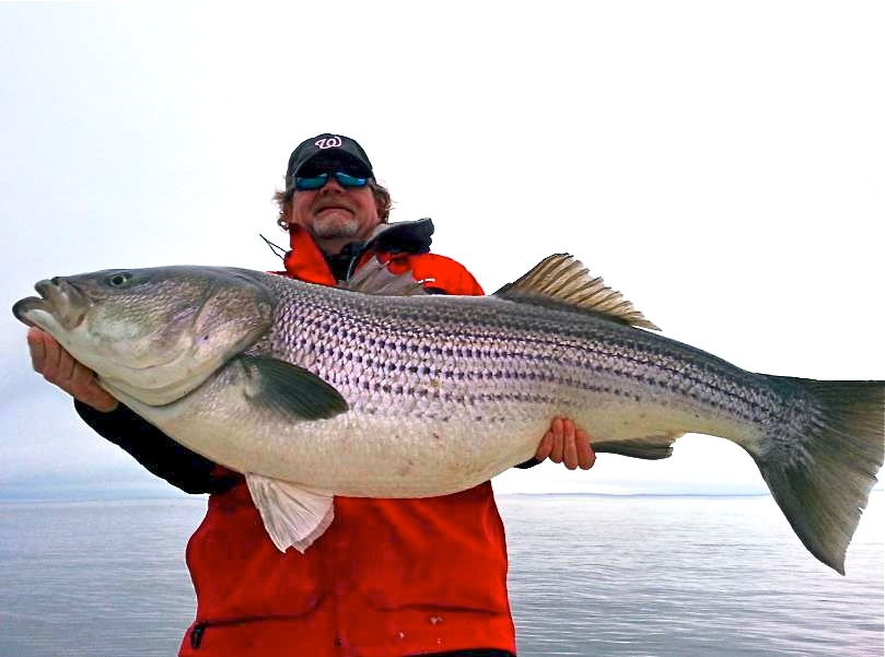 Striped bass dnr news for Md dnr fishing license