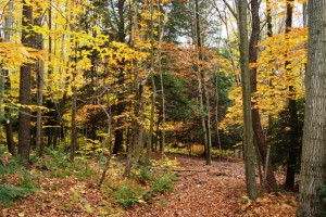 Permanently protected forest land in Garrett County