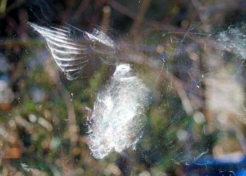 Photo of mark left by bird that hit window