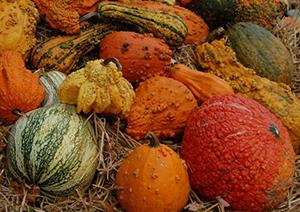 Heritage Harvest Festival bounty