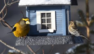 photo of birds at feeder