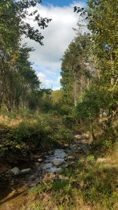Photo of stream after riparian forest buffers grew