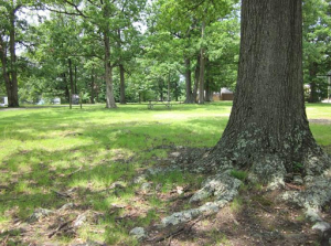 Photo of lawn with trees