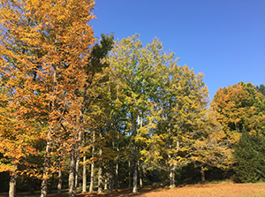 Potomac Garrett State Forest, photo by Scott Campbell