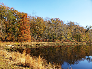 Cedarville State Forest Pond, photo by Daniel Akwo