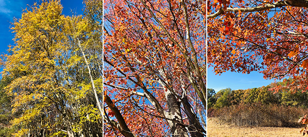 Photo Collage of fall foliage at Harriet Tubman Underground Railroad State Park, Photo by Dana Paterra