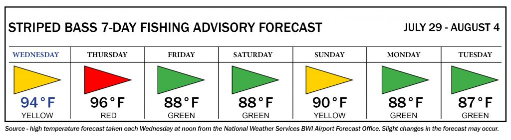 Striped Bass advisory forecast showing yellow flag days on Wednesday and Sunday; red flag day on Thursday; green flag days on Friday, Saturday, Monday and Tuesday