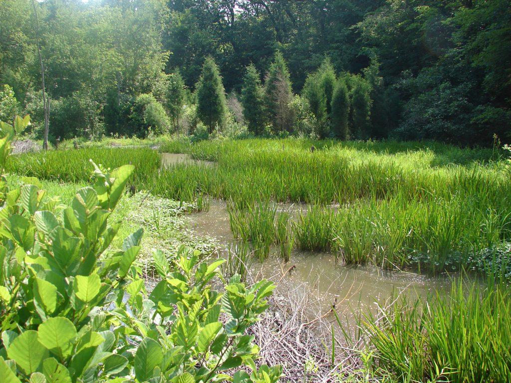 Photo of marshland